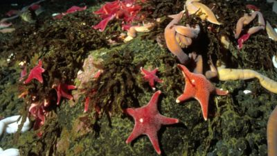 havsbotten djur i antarktis