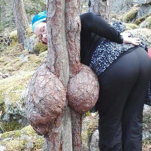 Pahkainen puu.