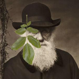 Charles Darwinin valokuva ja sen edessä lehti