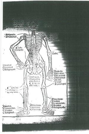 Piirustus luurangosta keskiaikaisessa englantilaisessa lääketieteellisessä kirjoituksessa.