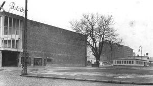 Svartvit bild med Glaspalatset pilträd.