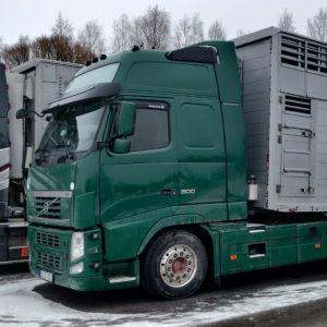 Turkistarhaajat pyrkivät estämään elävien siitoskettujen vientikuljetuksen Kokkolassa 16. tammikuuta 2020.