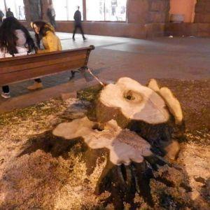 Träd fälls i hjärtat av Kiev