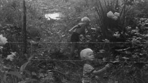 mv, kaksi poikaa pellolla, piikkilanka-aita