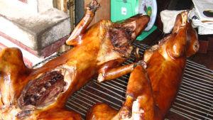 hundar på grill i Vietnam