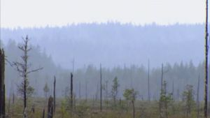 Vy från Patvinsuo nationalpark