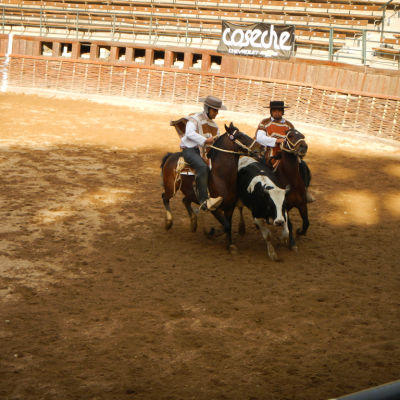 Om det finns intresse att lära känna den traditionella kulturen kan man söka sig till en plats där det dansas cueca, Chiles nationaldans, eller utövas rodeo, nationalsporten i landet.