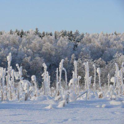 Tuusulanjärven talvinen maisema