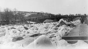 Islossning i Aura å. Tiotals människor skådar Halisgubbarna vid Aurabron.
