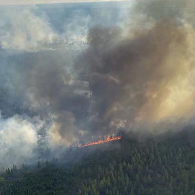 En stor yte skog som brinner.