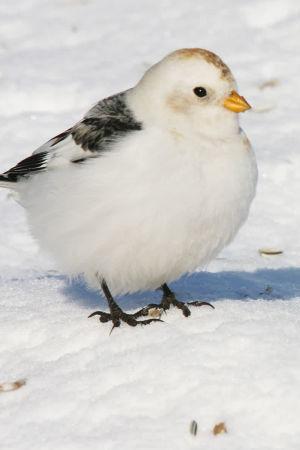 Pulmunen lumihangessa