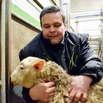 Anders Norrback pitelee lammasta sylissään