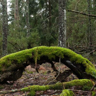 Luonnonperintösäätiö osti metsäalueen Taivassalosta.