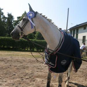 valkoinen hevonen