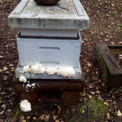 Ilkivaltaa mehiläispesällä.
