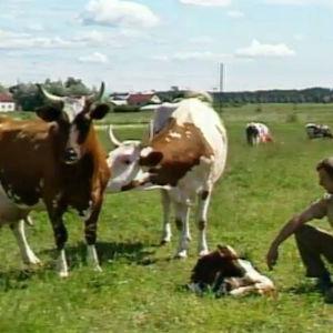 En bondgård med kossor