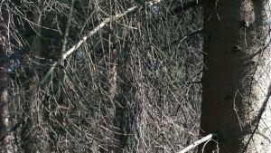 Ett träd i en skog
