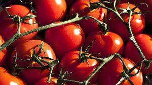 Tomater är gott. Mumseli mums