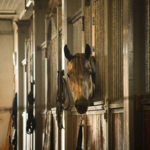 Hevonen kurkistaa kameraan tallissa