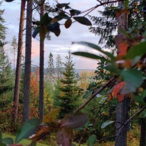 Bild på träd med röda blad och blå himmel.