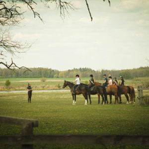 ratsukoita ruohokentällä