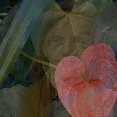 En bild på en transparent blomma