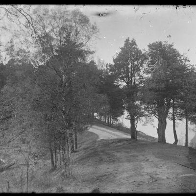 Suonenjoen Kellarikalleriassa Maija Aranton kuvien näyttely 2014