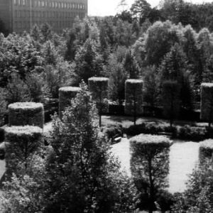 Sibelius-puiston puita ja pensaita.