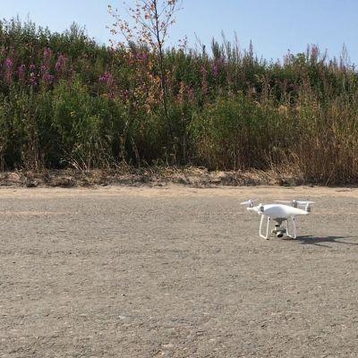 Droonien avulla maastosta etsitään sinne kuulumattomia vieraslajeja.