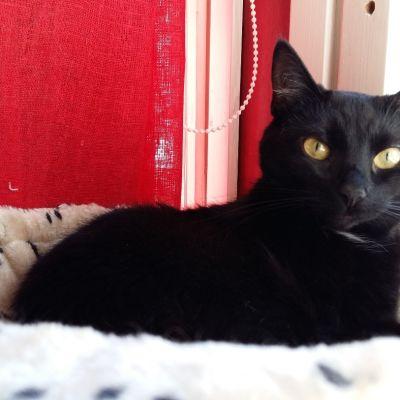Maija-kissa makoilee kiipeilytelineessä