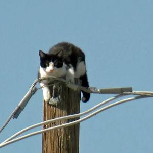 Katt uppe i elstolpe i Phoenix i Arizona.