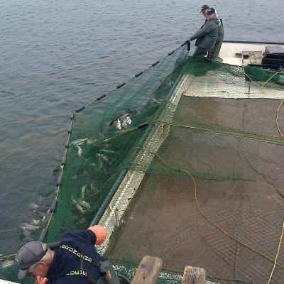 Rysäkalastusta Huron-järvellä Yhdysvalloissa.