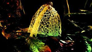 Värikäs kuva erikoisesta sienestä ja sen hamemaisesta rihmastosta.