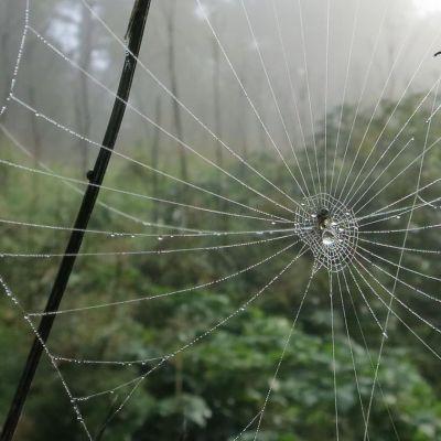 Sadepisaroita hämähäkinverkossa