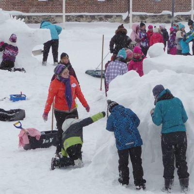 Lumiveistoksia Riihisaaressa.