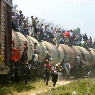 Laittomat siirtolaiset tulevat Meksikosta Yhdysvaltoihin junan vaunun päällä