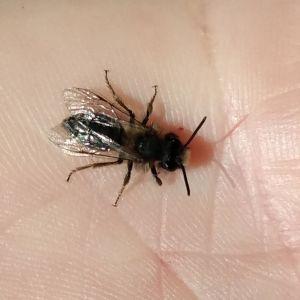 En insekt