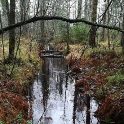 Pieksämäellä sijaitseva Mustosen ja Pyijyn välinen puro