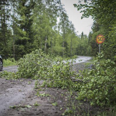 Kuvassa tielle kaatunut puu.