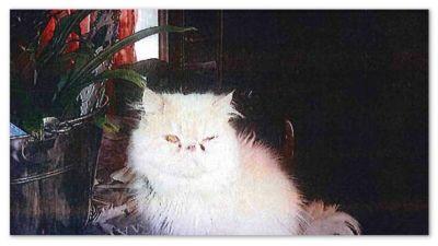 En av de vanvårdade katterna i huset