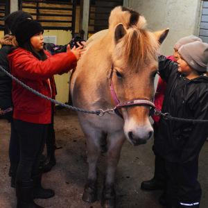 Flera barn står på var sida om en beige häst inne i ett stall.