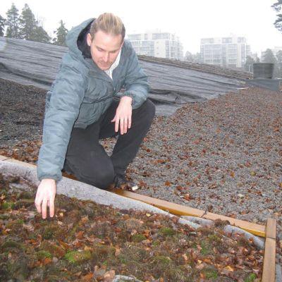 Meilahden liikuntahallin katolle on kuljetettu erilaisia maa-aineksia keväällä tuotavan sammalen kasvualustaksi.