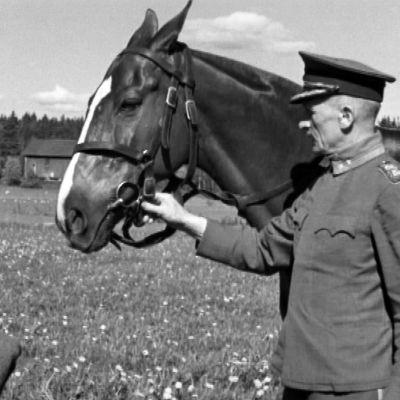 Hevonen ja kouluttaja