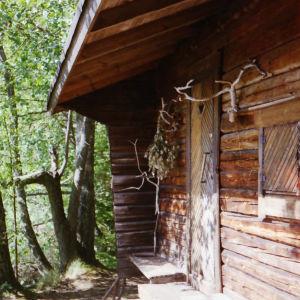 Hirsisaunan sisäänkäynti keskellä metsäistä näkymää. Saunan seinään kiinnitetty poron sarvet.