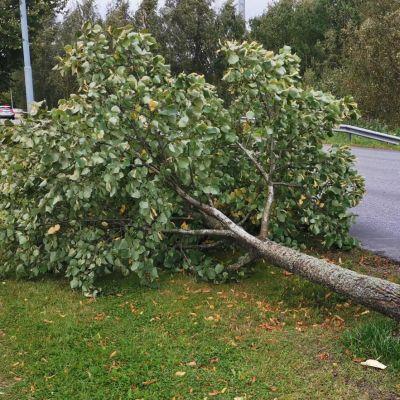 Tältä näyttää Aila-syysmyrsky eri puolilla Suomea