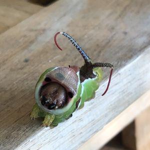 Jessica hittade en mystisk insekt på bastuterassen och undrar vad det är.
