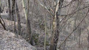 Ravinen Babij Jar år 2003.