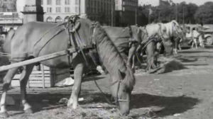 Hevosia Kauppatorin laidalla vuonna 1950