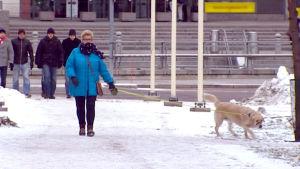 Raili Harakka ulkoiluttaa koiraansa.