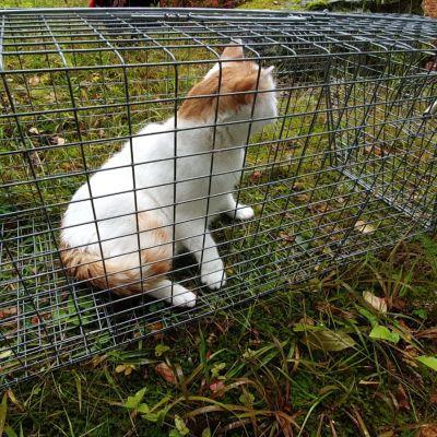 En vit och orange katt i en bur.